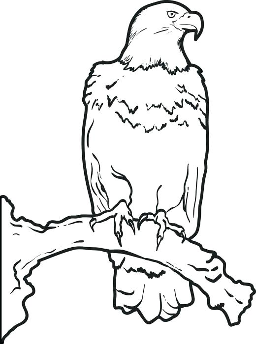 520x700 Eagle Coloring Book As Well As Eagle Coloring Eagle Flying