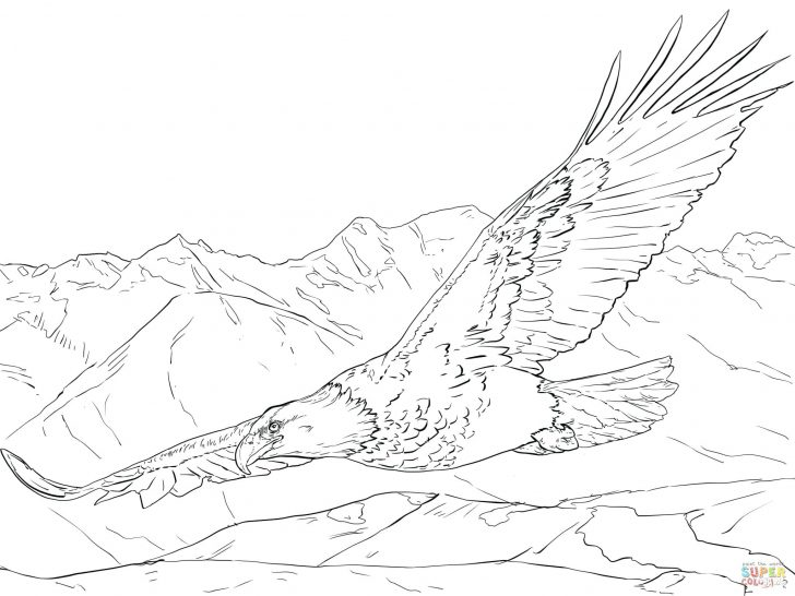 728x546 Eagle Flying Coloring Pages Page High Definition Wallpaper Letter
