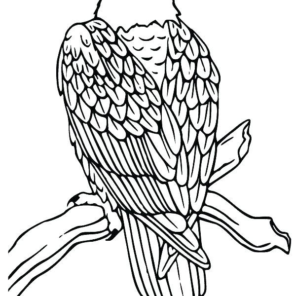 596x600 Golden Eagle Coloring Page