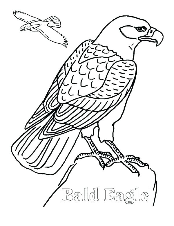 600x776 Philadelphia Eagles Coloring Pages Coloring Pages Of Eagles