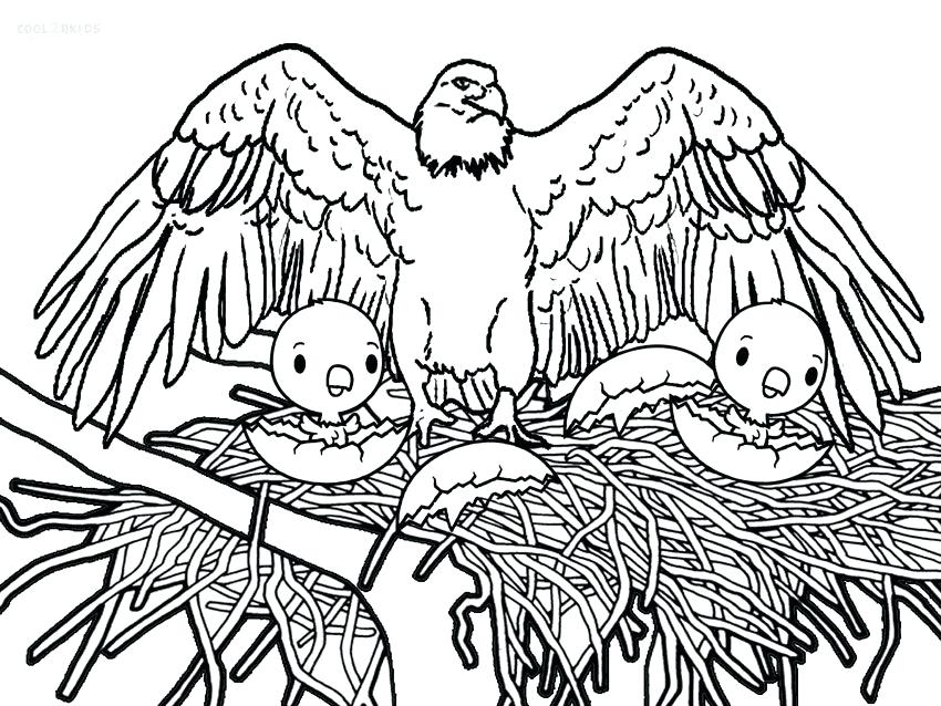 850x638 Printable Bald Eagle Coloring Pages For Kids Birds Printable Bald