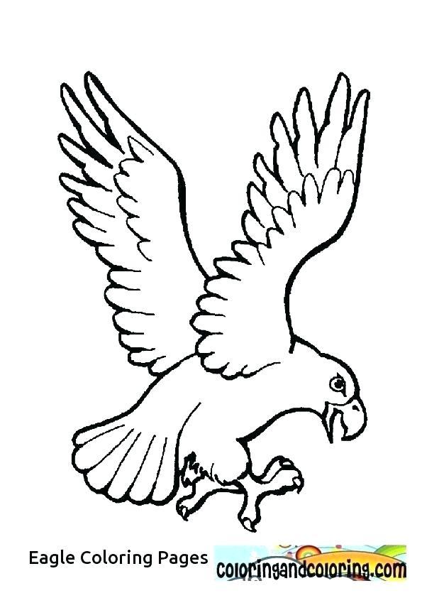 595x842 Eagle Color Page