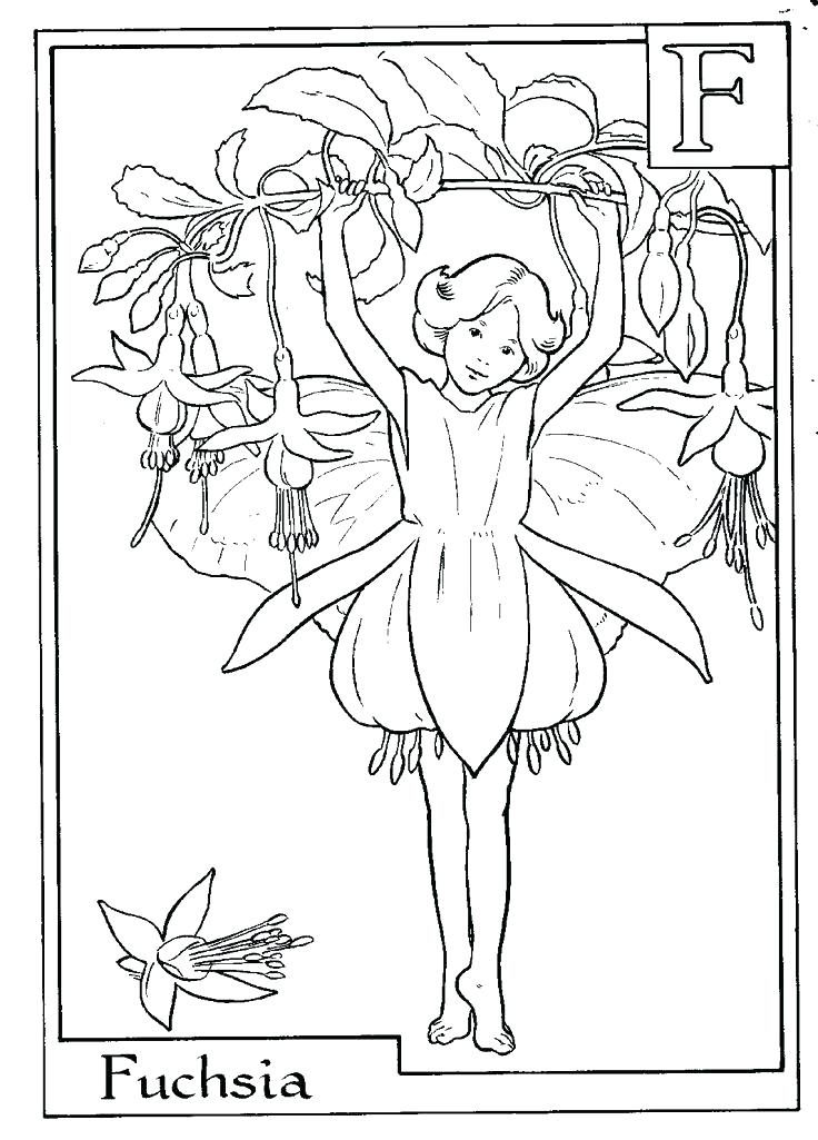 736x1025 Flower Fairy Coloring Pages Flower Fairies Coloring Pages Flying