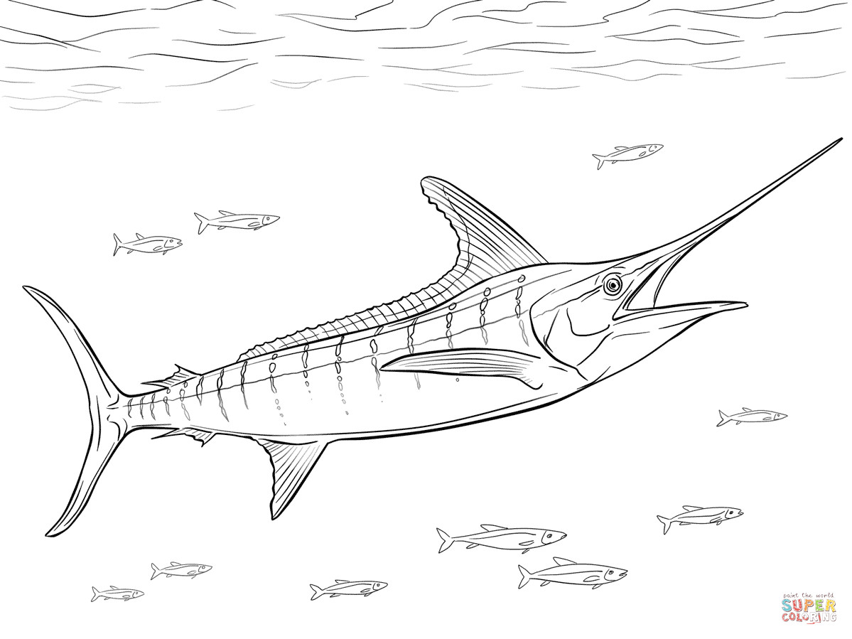 1199x899 Flying Fish Coloring Page Fiscalreform Unbelievable