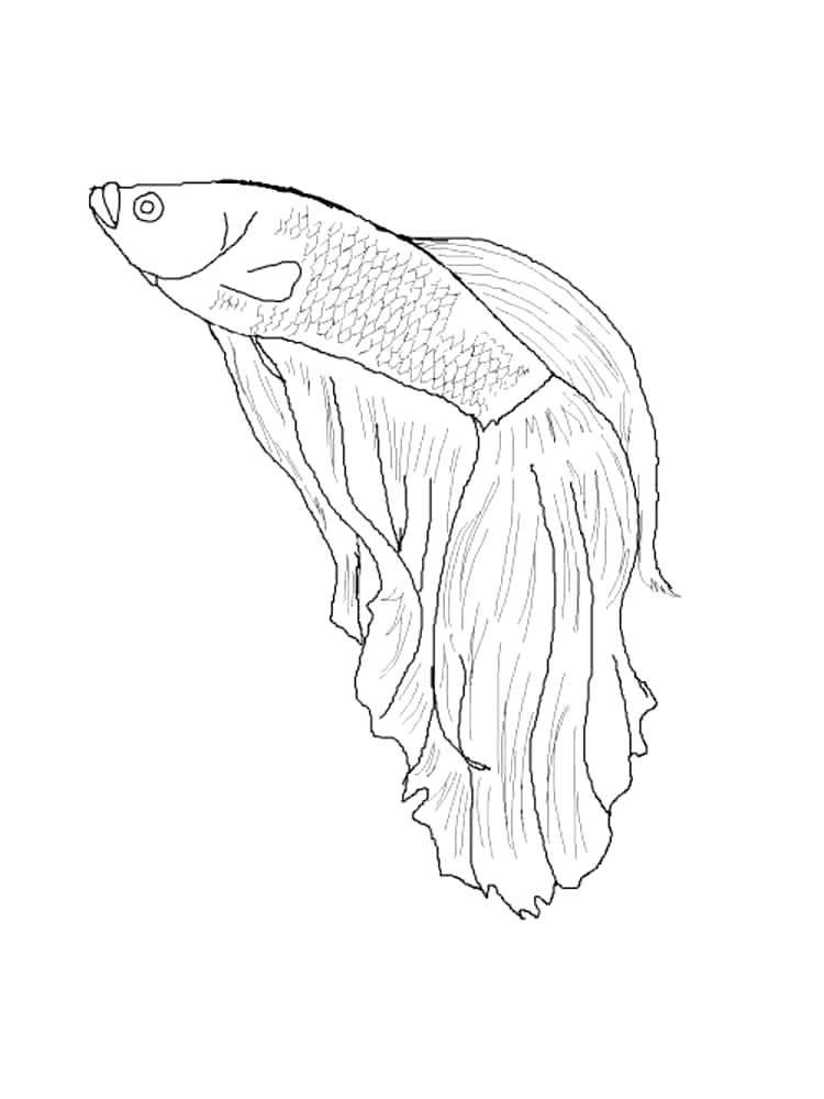 750x1000 Flying Fish Coloring Page Fish Coloring Pages Coloring Pages