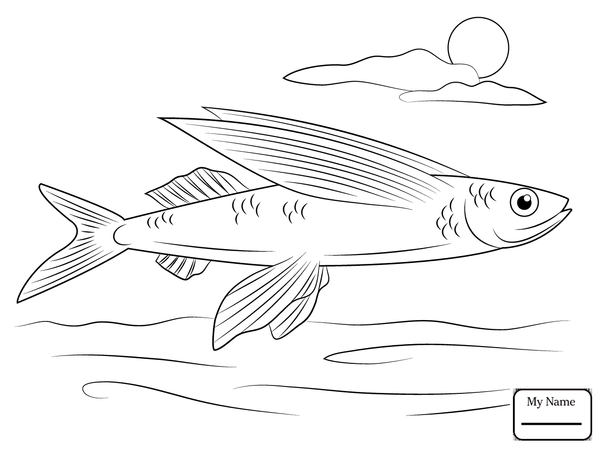 1223x912 Flying Fish Coloring Pages Printable Coloring For Kids