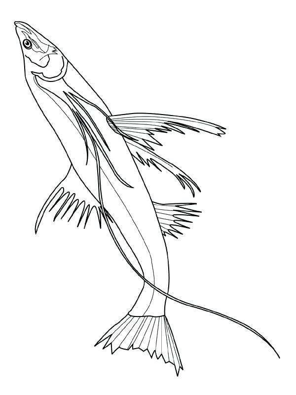 600x800 Fish Coloring Picture