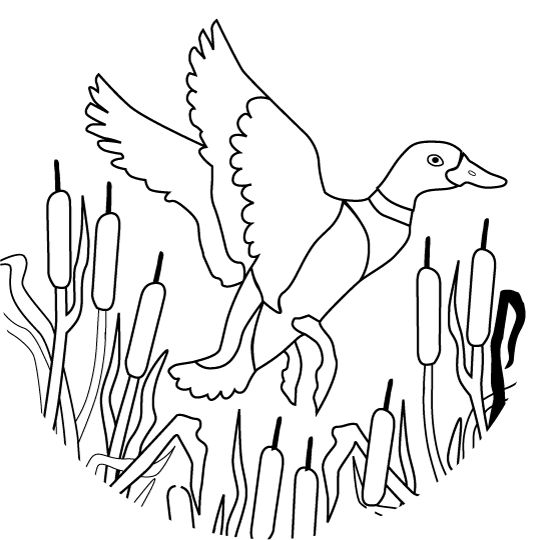 540x540 Duck Hunting Coloring Pages Duck Hunting Coloring Pages Best