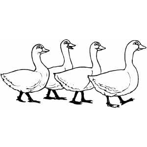 300x300 Four Geese Coloring Sheet