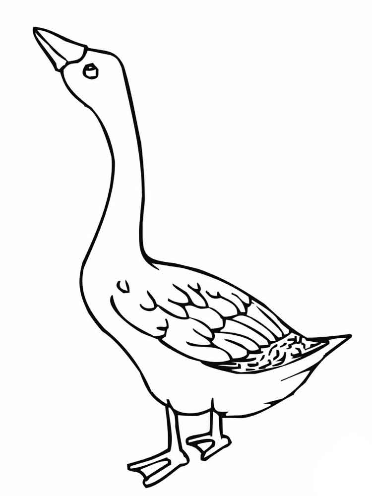 750x1000 Nene Goose Coloring Page Online Coloring Pages Starting