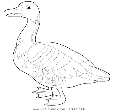 450x429 Flying Canada Goose Coloring Page Coloring Design