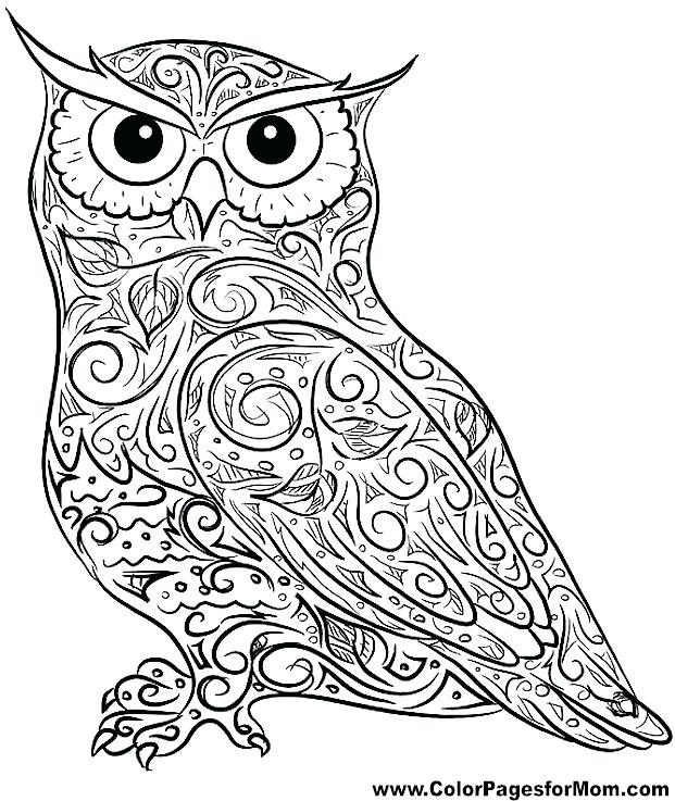 621x737 Coloring Pages Owl Delectable Owl Coloring Pages Flying Owl