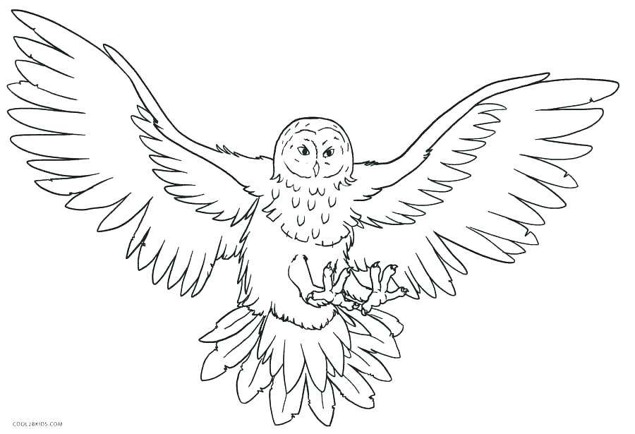 900x615 Coloring Pages Printable Animals Zoo Animal Coloring Pages