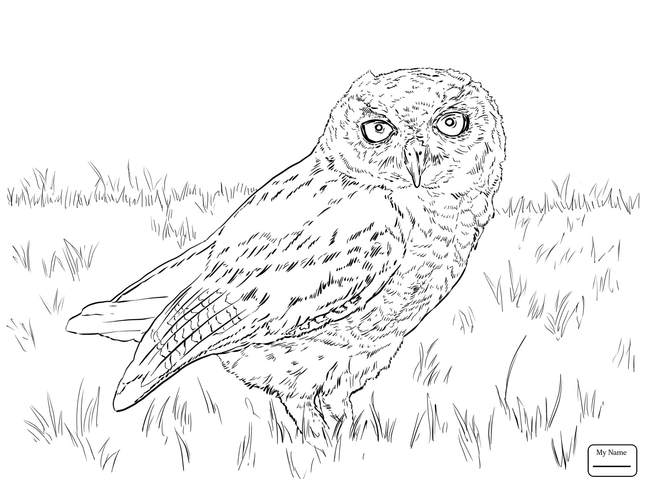 2089x1567 New Birds Barn Owl Owls Coloring Pages