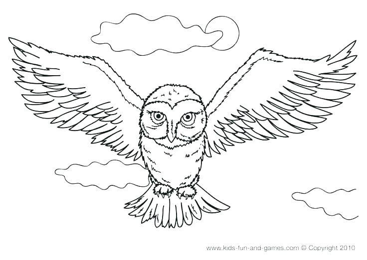 736x522 Owl Color Pages Owl Color Pages Snowy Owl Coloring Pages Snowy Owl