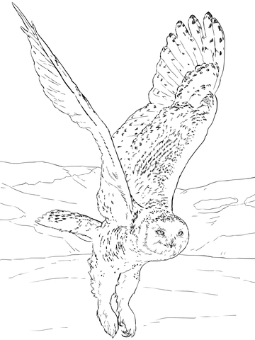 360x480 Snowy Owl After Flight Coloring Page