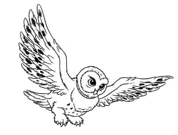 600x456 Flying Owl Coloring Page