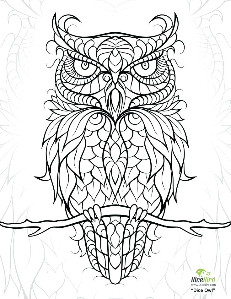 736x952 Owl Coloring Pages