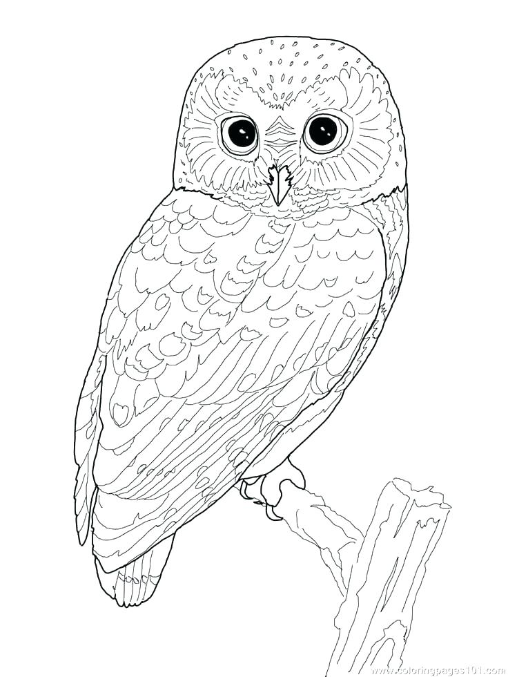 736x980 Owl Mandala Coloring Pages For Adults