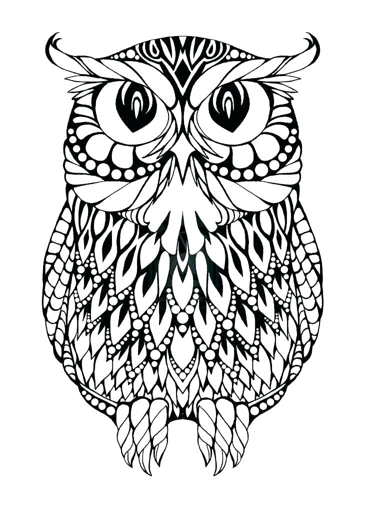 736x1013 Cartoon Owl Coloring Pages Owl Coloring Page Cute Owl Coloring