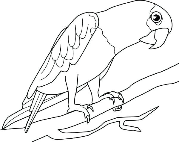 600x474 Parrot Coloring Pages Big Parrot Coloring Page Flying Parrot