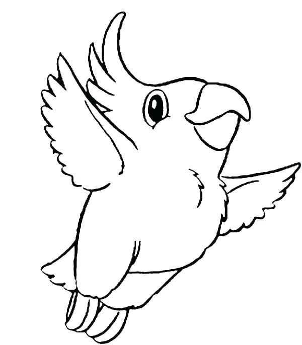 600x686 Parrot Coloring Pages Flying Parrot Coloring Pages Flying Parrot