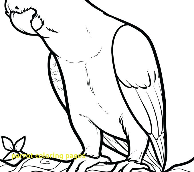 Flying Parrot Coloring Pages at GetDrawings.com | Free for ...