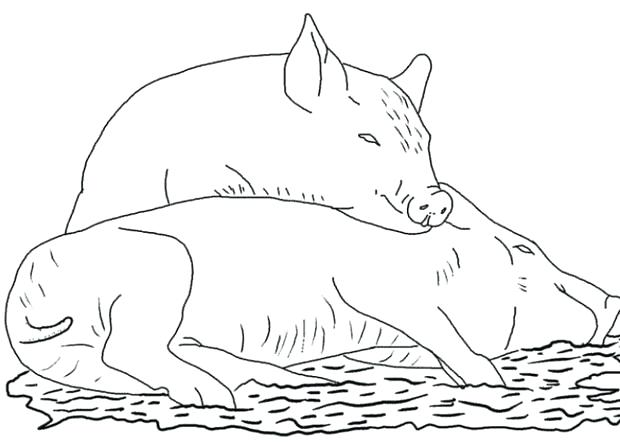 620x446 Pig Coloring Sheet Pig Coloring Pages Flying Pig Coloring Page