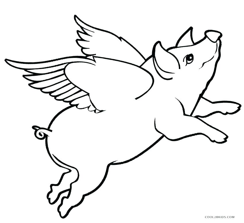 850x778 Guinea Pig Coloring Page Baby Pig Coloring Pages Coloring Pages