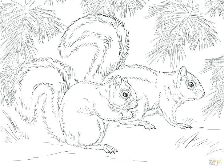 728x546 Squirrel Coloring Page Grey Squirrel Coloring Page Flying Squirrel