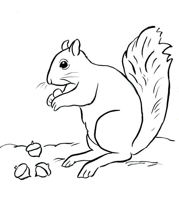 760x861 Squirrel Coloring Page Squirrel Coloring Page Flying Squirrel
