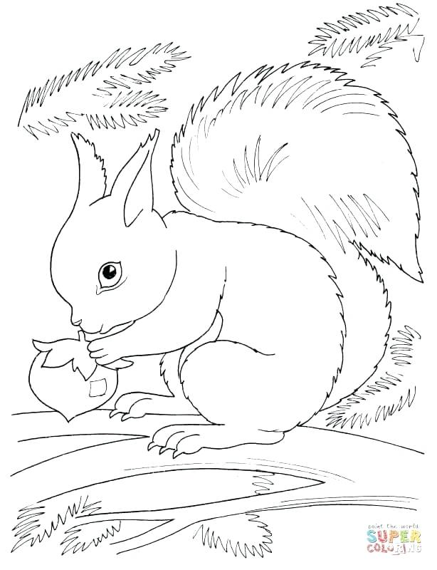 614x800 Squirrel Coloring Page Squirrel Eating Nut Flying Squirrel