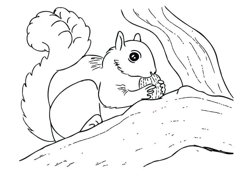 842x595 Squirrel Coloring Pages Squirrel Coloring Pages Flying Squirrel