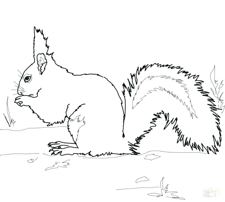 image about Squirrel Printable identified as Traveling Squirrel Coloring Web page at  No cost for