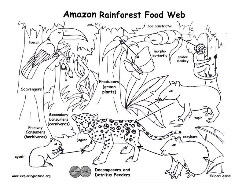 792x612 Colouring Pages Of Food Chain