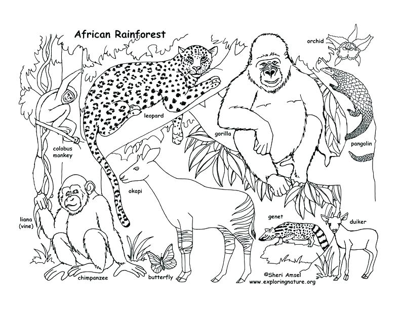 792x612 Food Chain Colouring Sheets Coloring Pages For Preschoolers Page