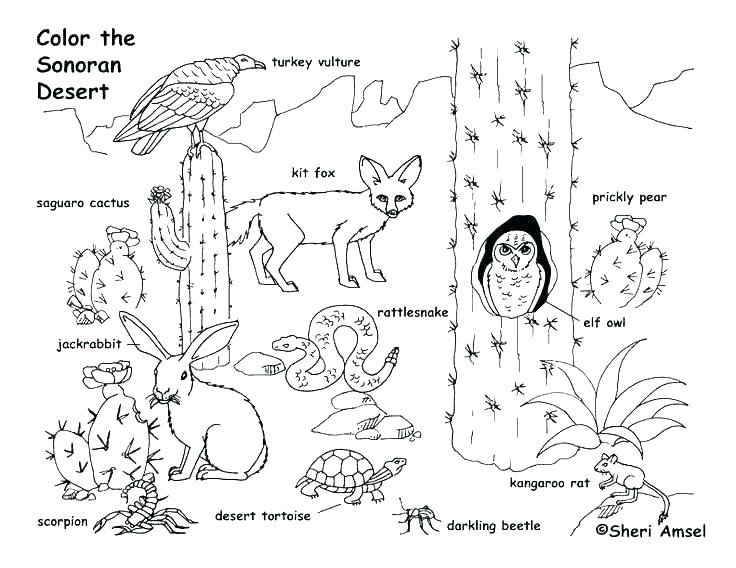 736x568 Food Web Coloring Pages Food Chain Coloring Pages Food Web