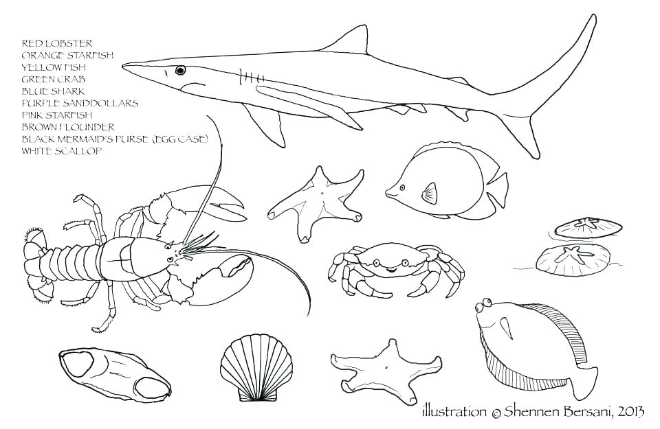 960x625 Coloring Pages Food Coloring Pages Food Food Chain Coloring Page