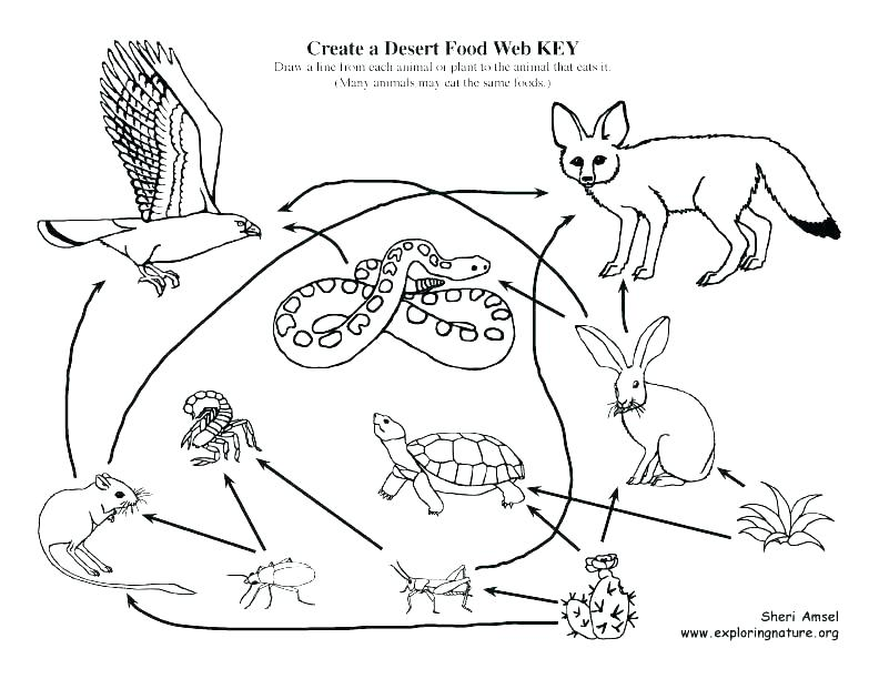 792x612 Food Web Coloring Pages Food Chain Coloring Pages Food Chain