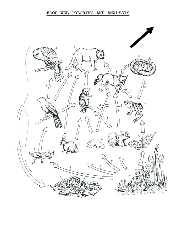 736x952 Marvelous Food Chain Coloring Pages Food Chain Coloring Pages Food