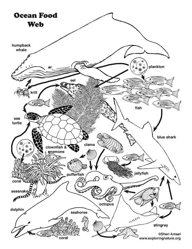 612x792 Ocean Food Web Coloring Page