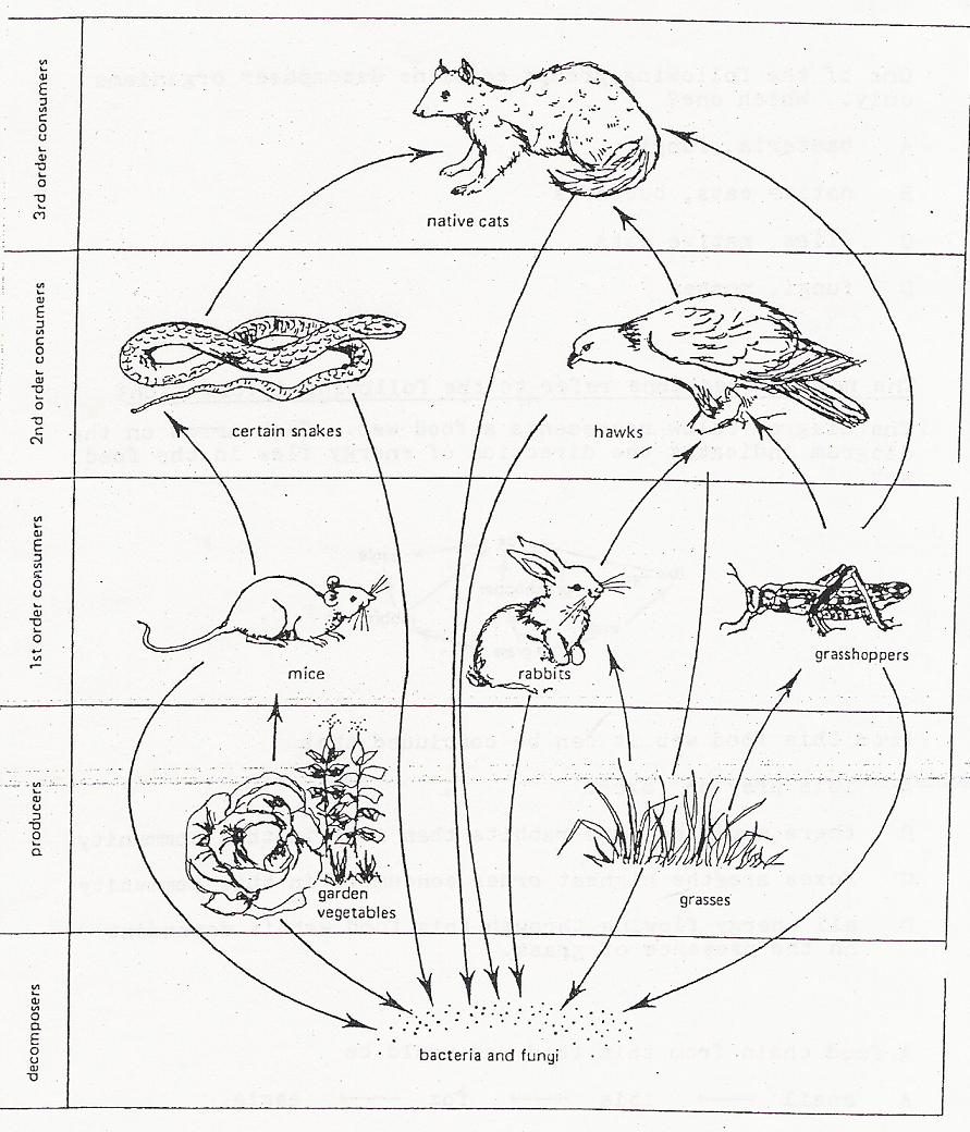891x1040 Food Chain Coloring Page