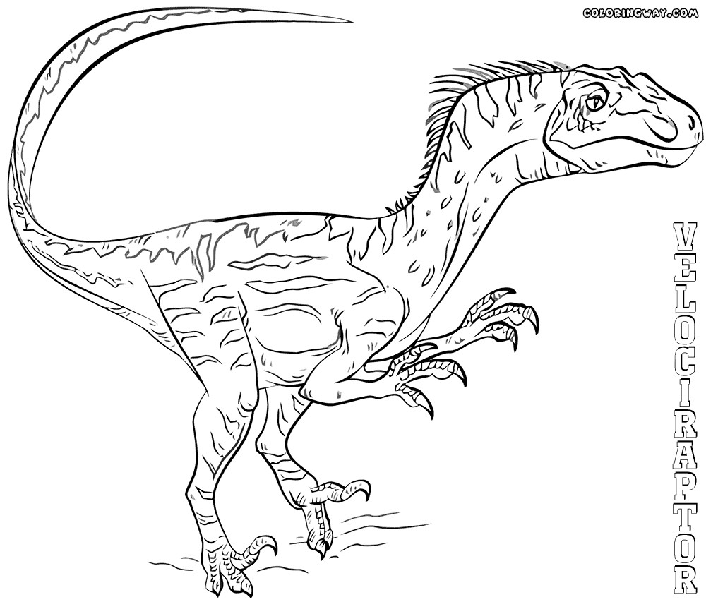 1000x853 Raptor Coloring Pages Pictures Free Coloring Pages Endear Page