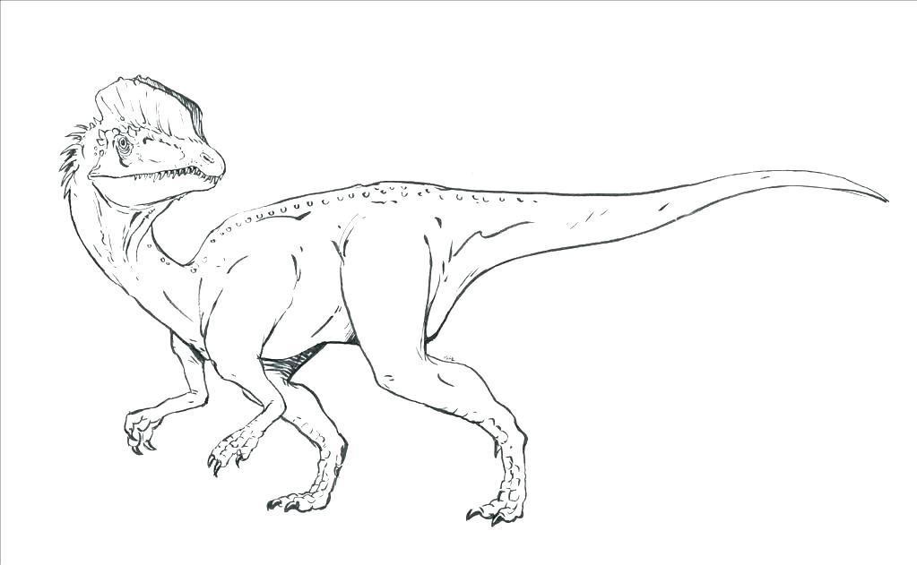 1023x631 Raptor Coloring Pages Coloring Page Coloring Page Coloring Pages