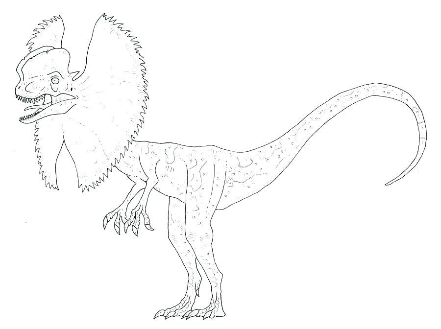 900x672 Raptor Coloring Pages Coloring Pages Coloring Pages Coloring Pages