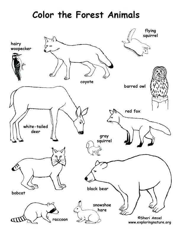 612x792 Forest Coloring Forest Animals Coloring Pages Forest Animals