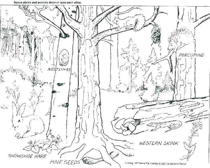 736x590 Forest Animals Coloring Pages Forest Animals Coloring Pages Forest