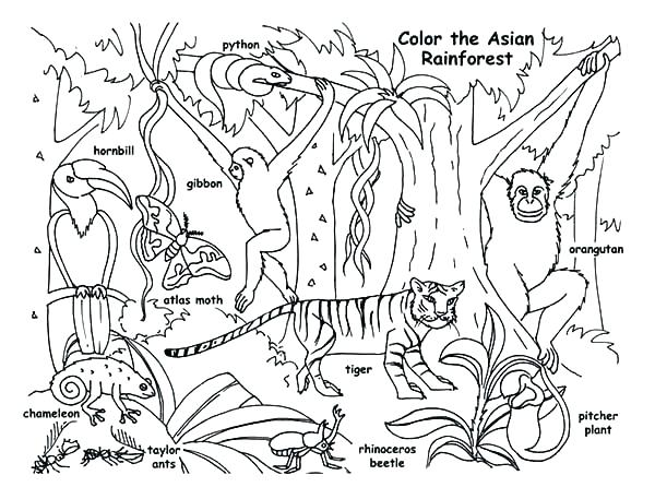 600x457 Forest Coloring Page Forest Animals Coloring Pages Rain Forest