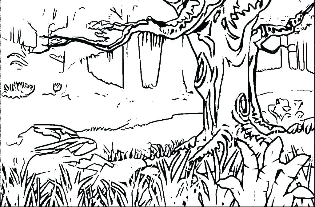 1024x673 Forest Coloring Pages To Print Coloring Pages Forest Coloring