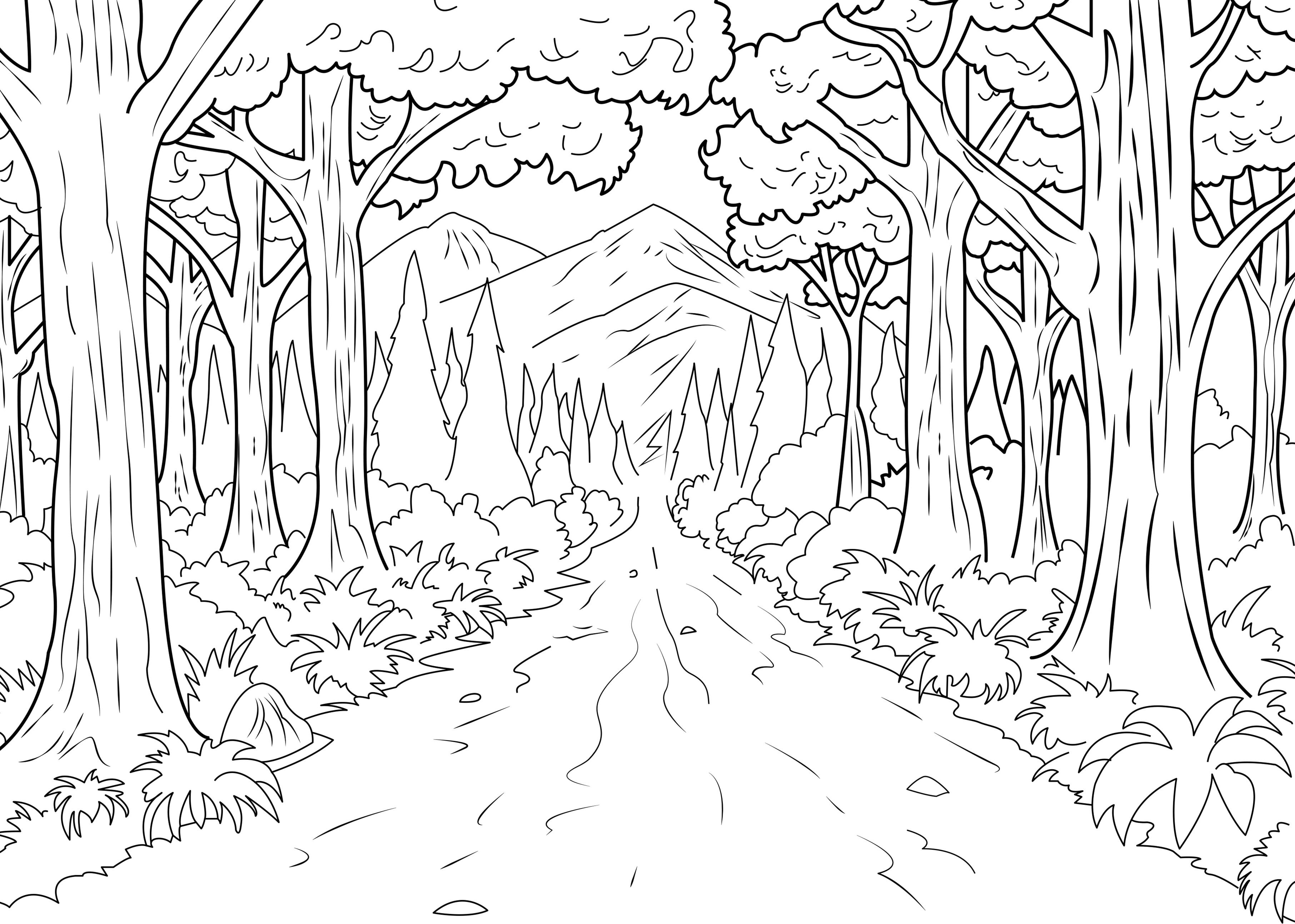 3625x2589 A Coloring Page Of Forest Made